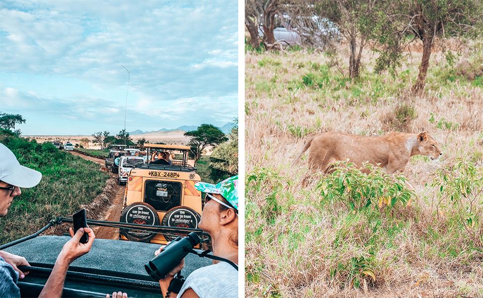 safaritaita